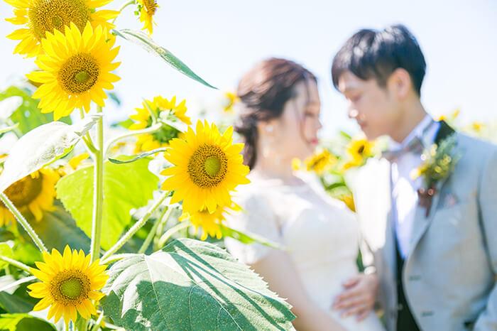 ひまわり畑で結婚式の前撮り 富山県高岡市ブライダルハウスひまわりがプロデュースするウェディングフォト