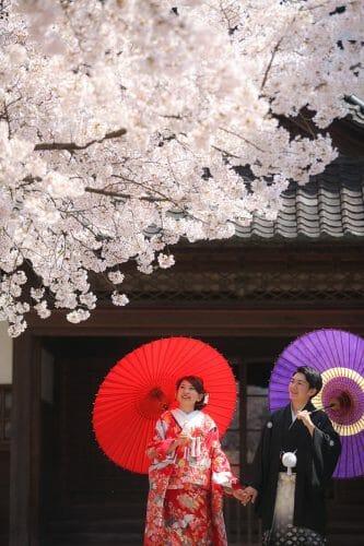 富山市の内山邸にて桜フォトウェディングを撮るなら、ブライダルハウスひまわりが一番人気