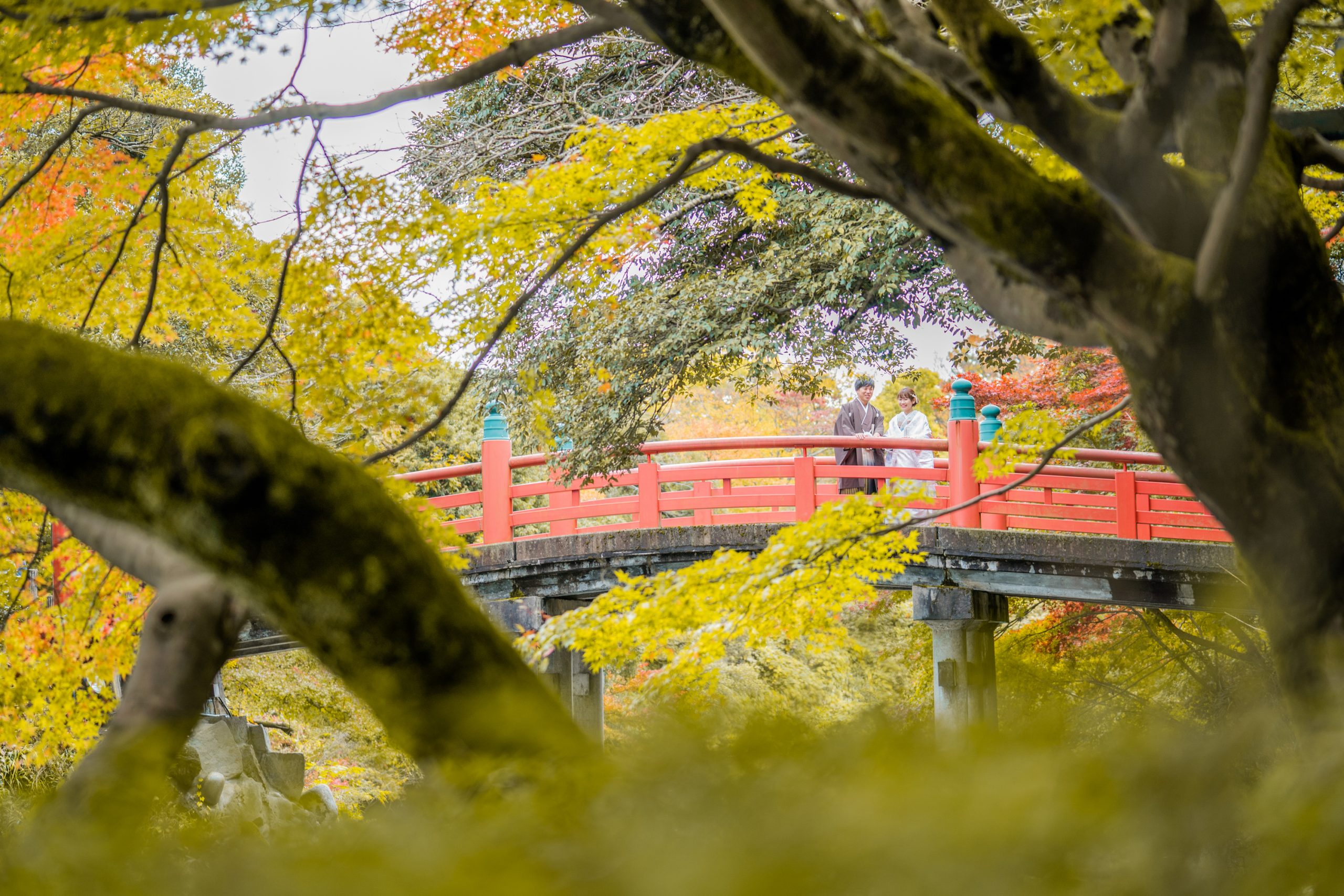 高岡市古城公園できれいな紅葉と赤い橋をバックに、新郎新婦の結婚式前撮り写真をひまわりがプロデュース